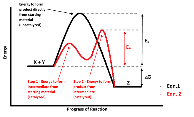 Figure 1 - Potential Energy Diagram of a catalyzed and uncatalyzed exothermic reaction